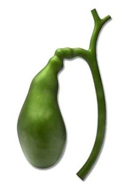 Image result for gallbladder